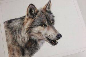 wolf-tutorial