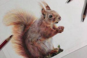 red-squirrel-tutorial
