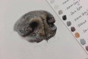 dog-nose-study