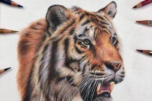 tiger-tutorial