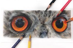 owl-eye-study