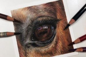 horse-eye-study