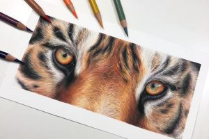 tiger-eye-double-study