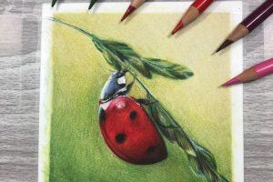 ladybird-tutorial