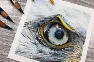 eagle-eye-study