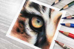 tiger-eye-study