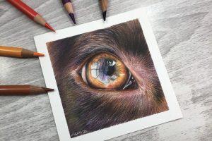 brown-dog-eye-study