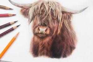 highland-cow-tutorial
