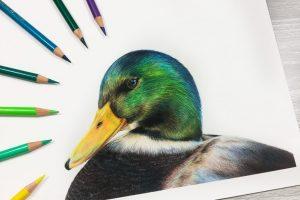 duck-tutorial
