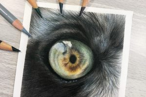 lemur-eye-study