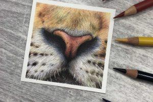 tiger-nose-study