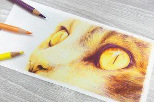 tonal-cat-eye-study