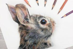rabbit-tutorial