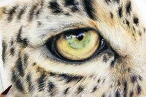 leopard-eye-study