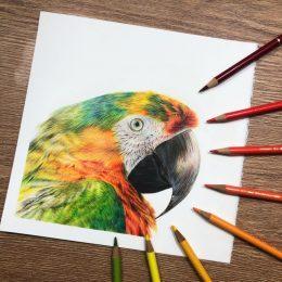 Macaw Tutorial